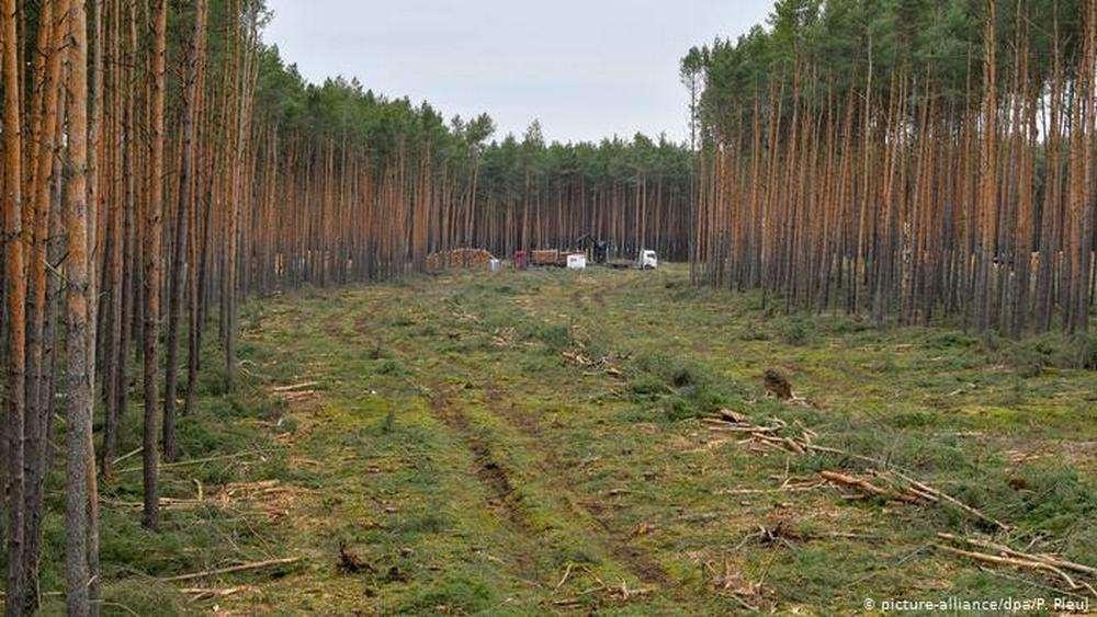 Первый завод Tasla построят под Берлином к середине 2021 года. Суд отклонил жалобу экоактивистов против вырубки леса