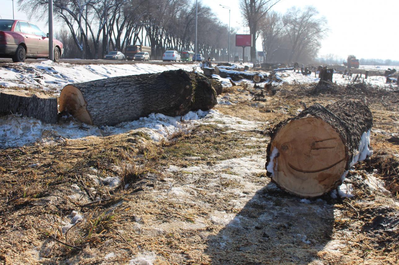 Для строительства развязки снесли 1830 деревьев