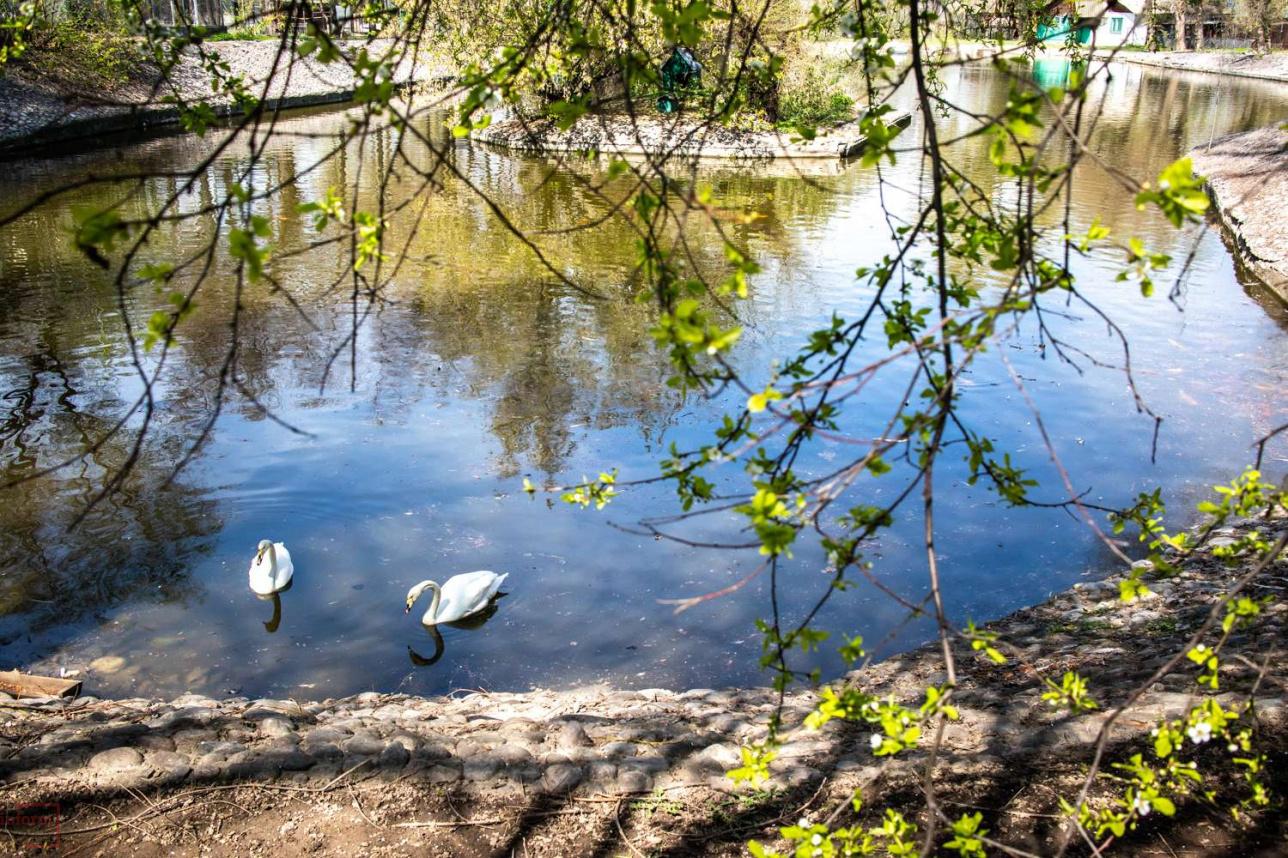 Пруд с водоплавающими птицами