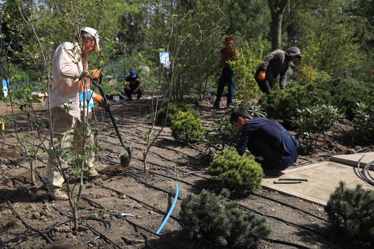 Дендрологи высаживают растения