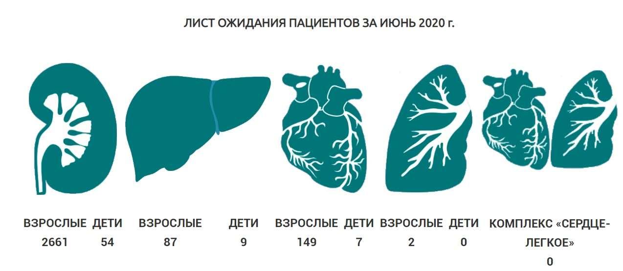 Скриншот с сайта transplant.kz