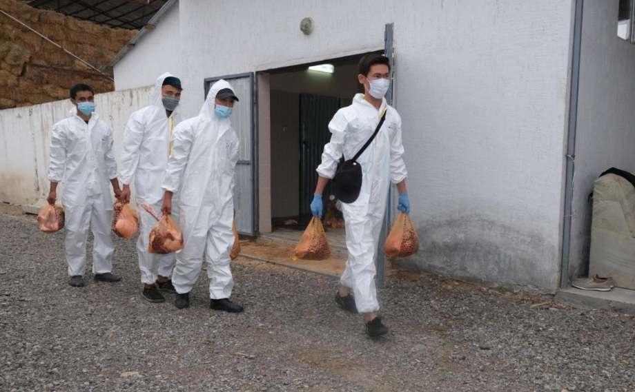 Волонтёры развозили мясо нуждающимся по домам