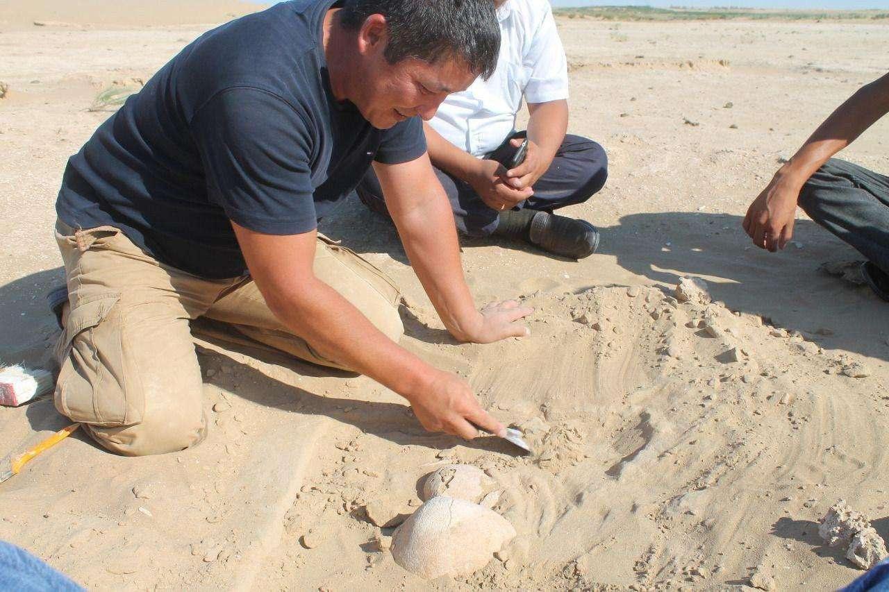 Археологические раскопки в Актюбинской области