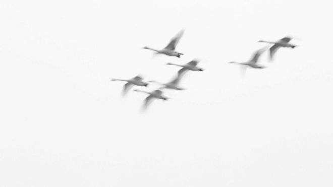 Стаи перелётных птиц не раз заставляли звучать сигнал тревоги
