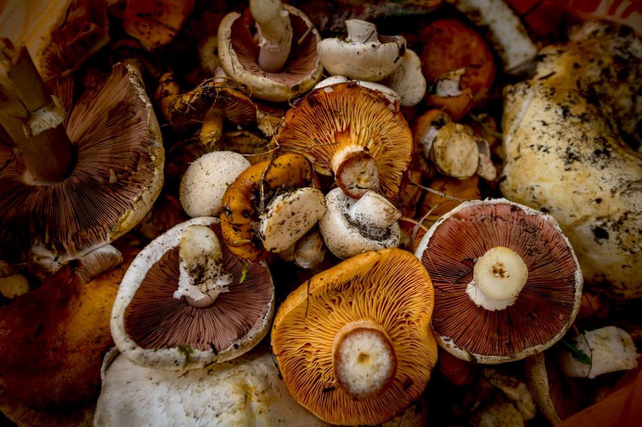 В свободное время инженеры обсерватории собирают грибы