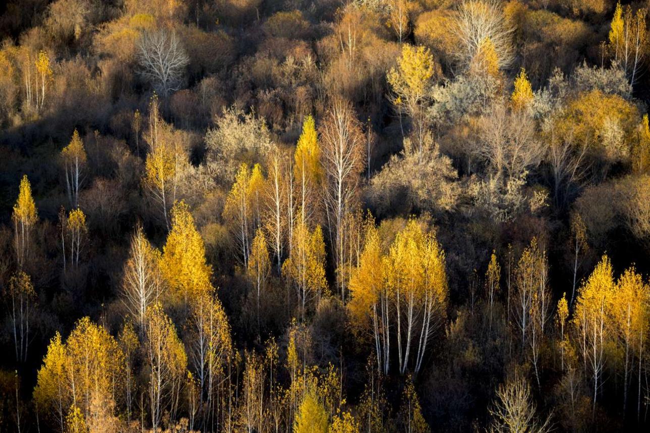 Осень в Прибалхашье очень красивая