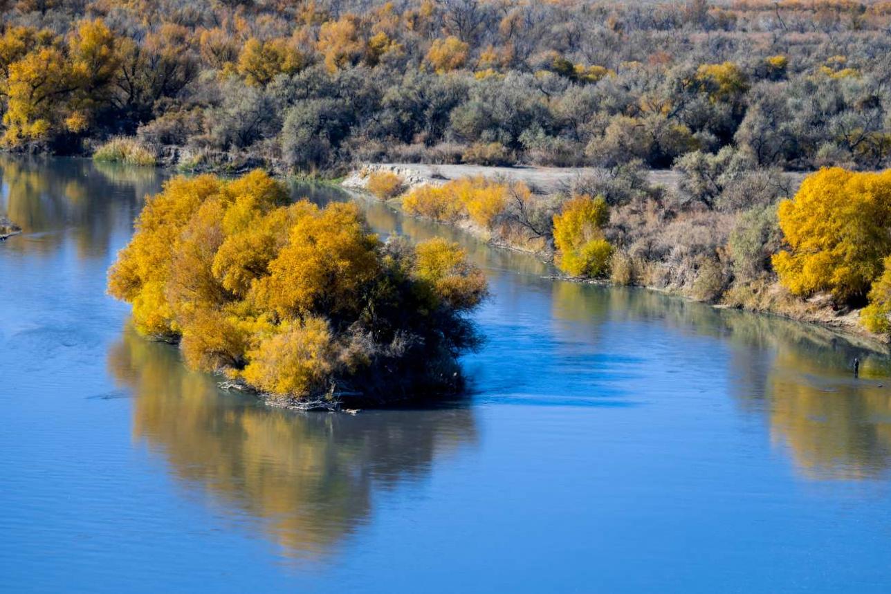 Тугайные леса в дельте Каратала становятся чрезвычайно живописными