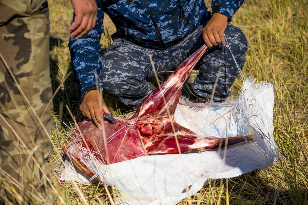 В кузове инспекторы обнаружили тушку убитого дикого животного
