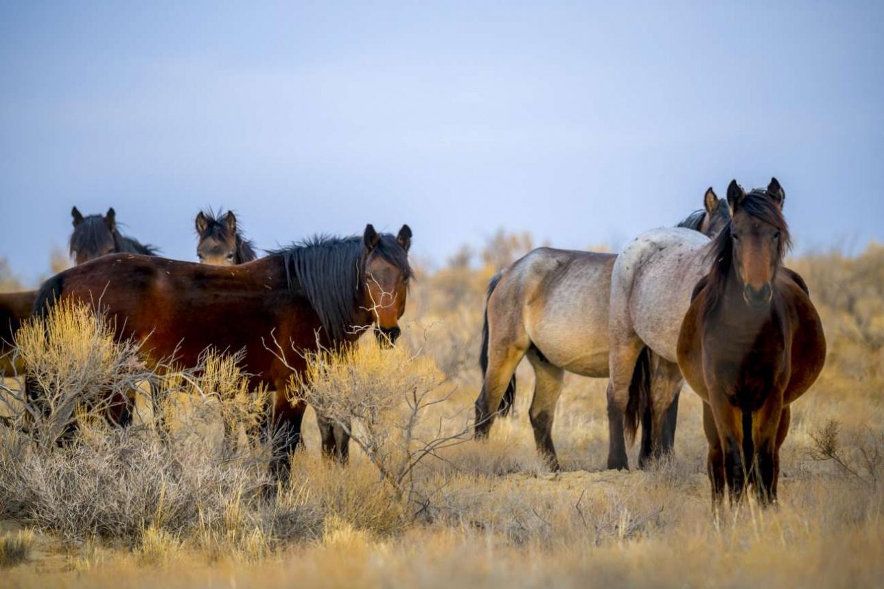 Лошади здесь предоставлены сами себе и становятся практически дикими