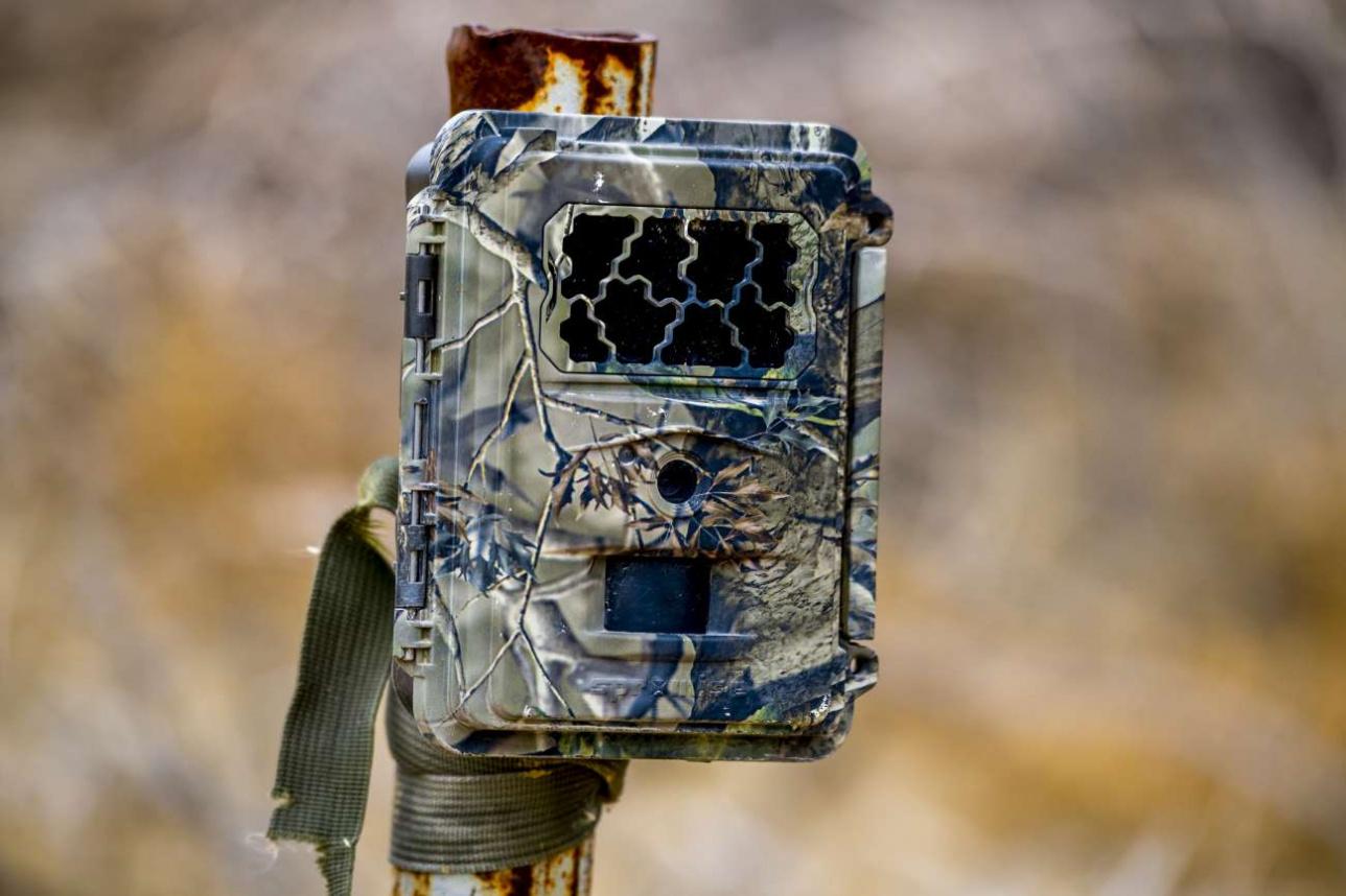 Для того, чтобы отслеживать, чем занимаются дикие животные, в резервате установили фотоловушки