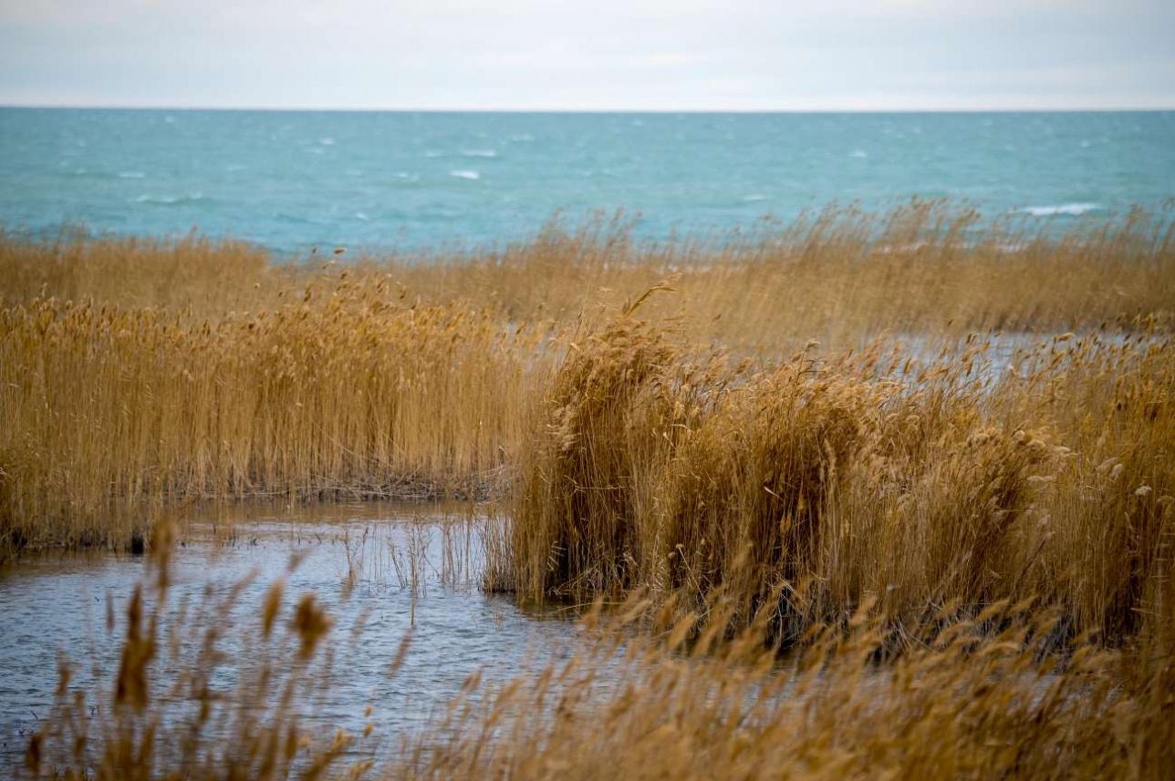 C севера естественной границей резервата является озеро Балхаш