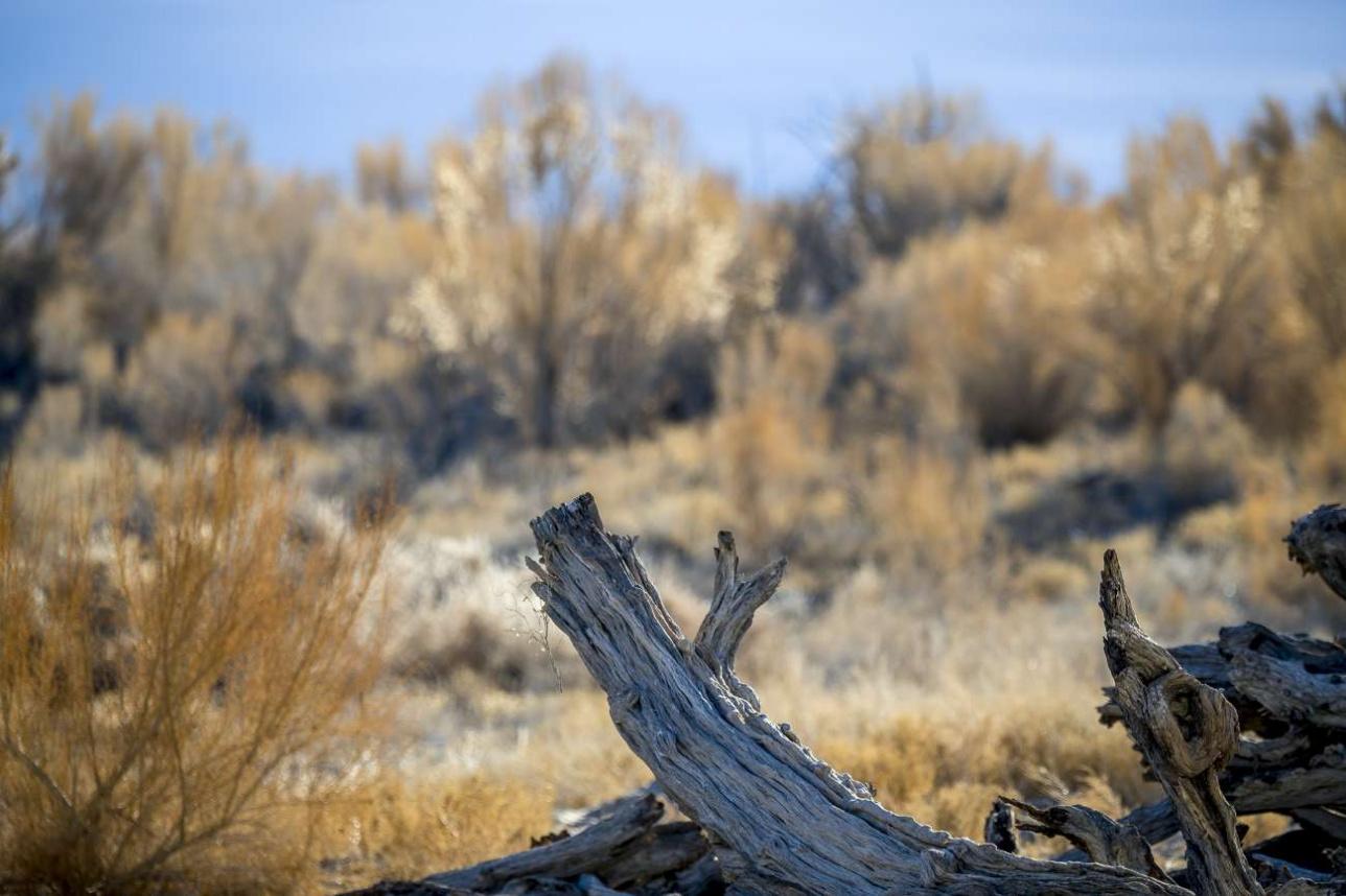 Прибалхашье – одно из двух мест на планете, где можно возродить популяцию туранского тигра