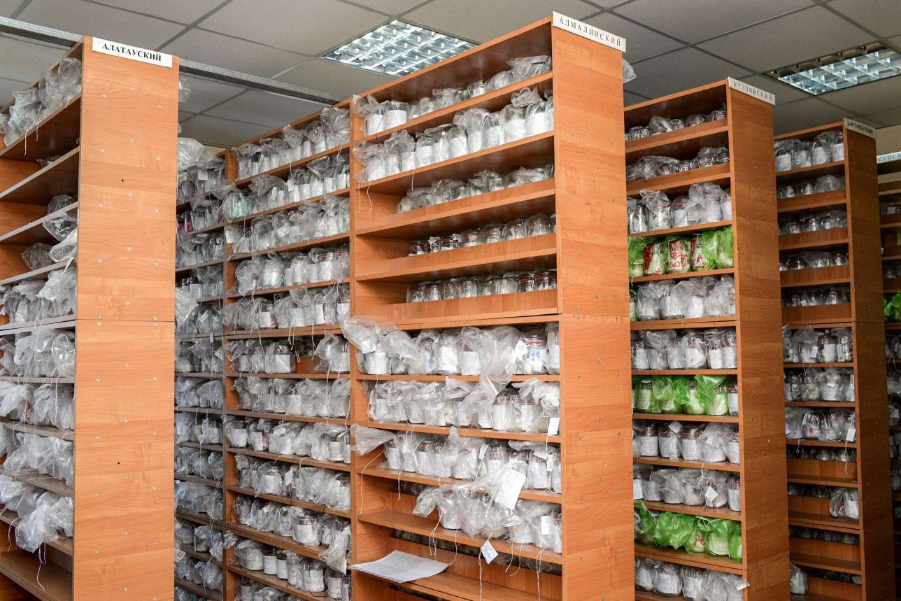 Одоротека ішіндегі иіс сақталған құтылар аудан бойынша бөлінген
