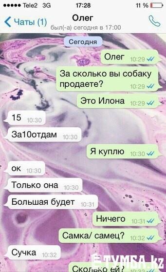 Переписка школьников в WhatsApp