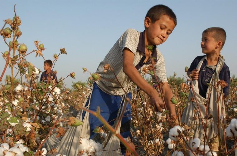 Дети собирают хлопок в Узбекистане