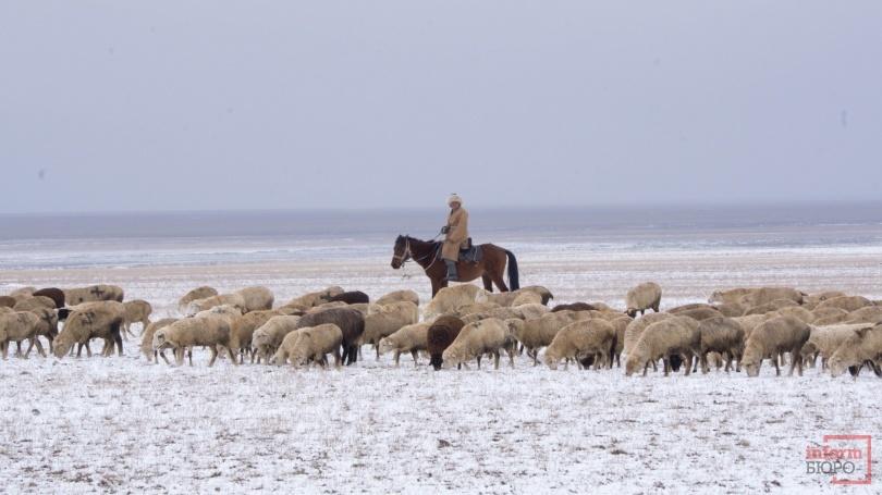 Для съёмок сериала арендовали даже отары овец