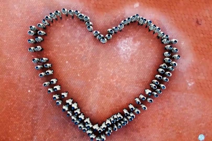 Жасуланвцы выстроились в форме сердечка