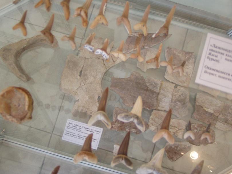 Акульи зубы из океана Тетис