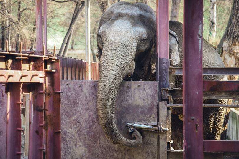 Слон Лао при желании откроет дверь, но бдительный кипер всегда рядом