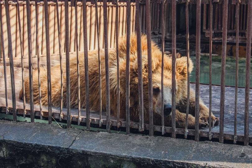 Медведи будут жить вместе с волками