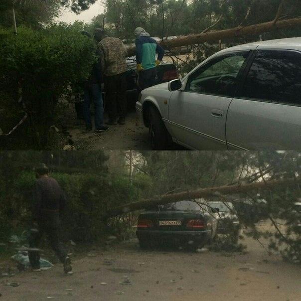 Упавшие деревья повредили несколько автомобилей