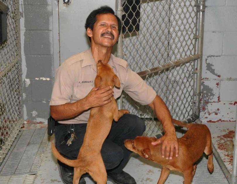 Собаки отвечают любовью директору приюта в США