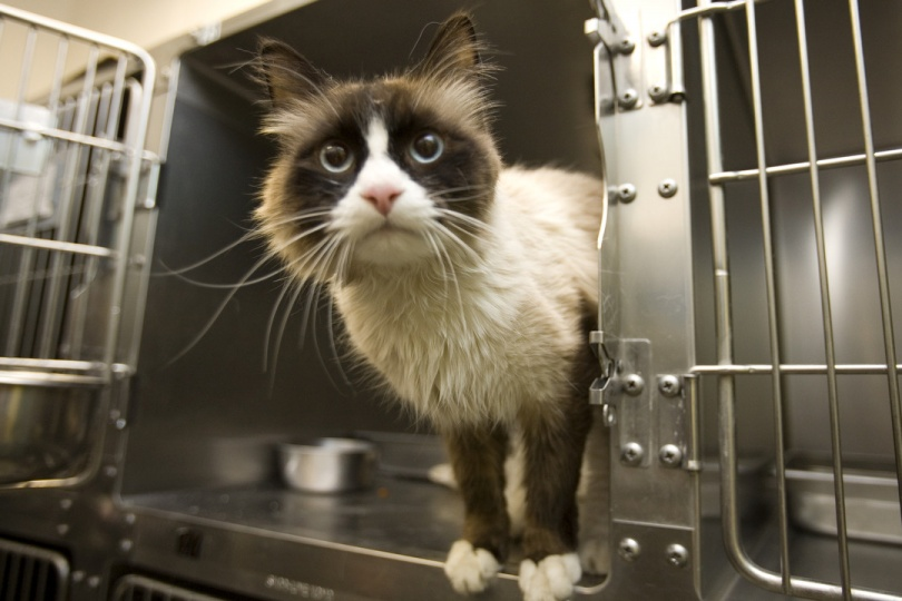 Приют должен стать приютом, а не бойней для животных
