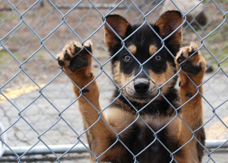 Виноваты в страданиях бездомных животных люди, но только они могут всё исправить