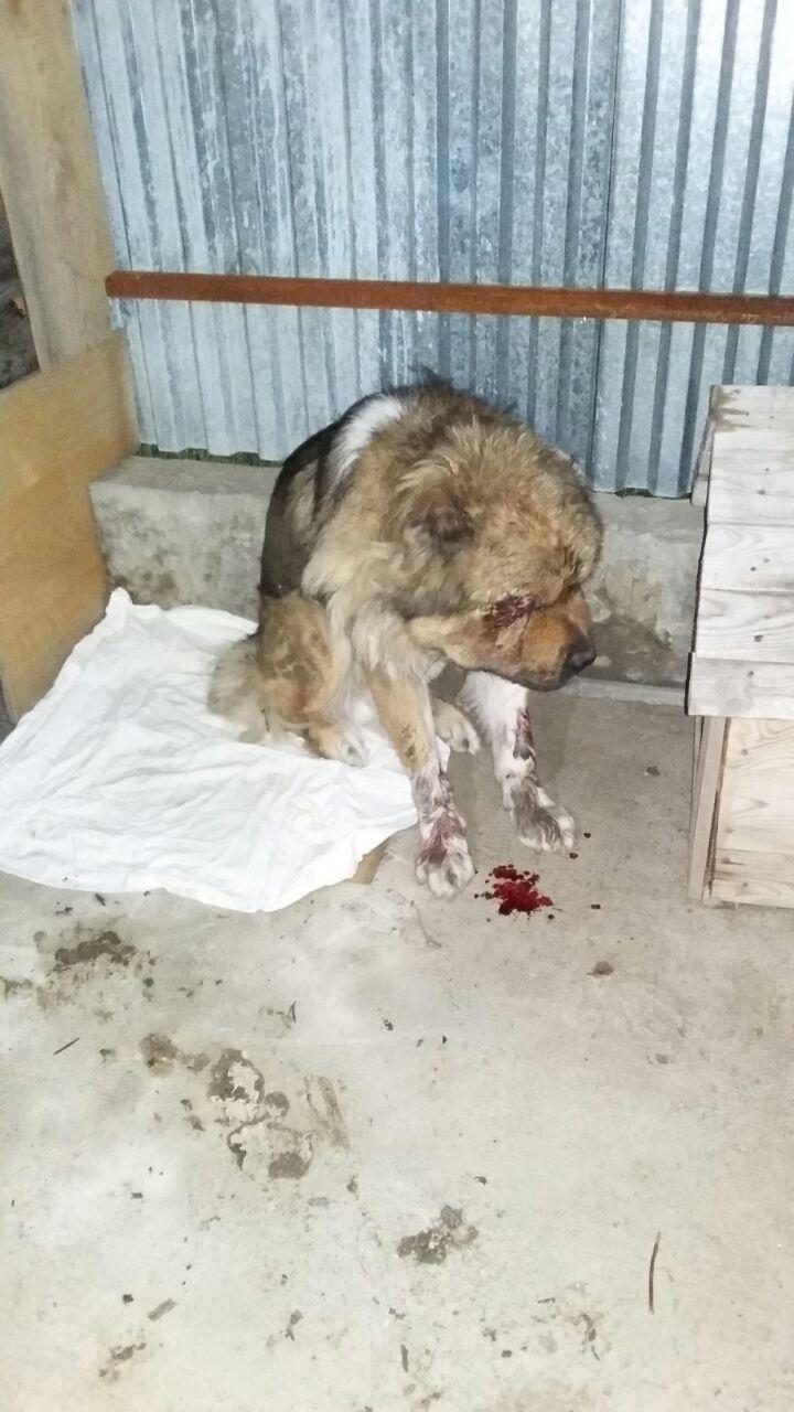 В Семее двое мужчин до полусмерти избили уличного пса
