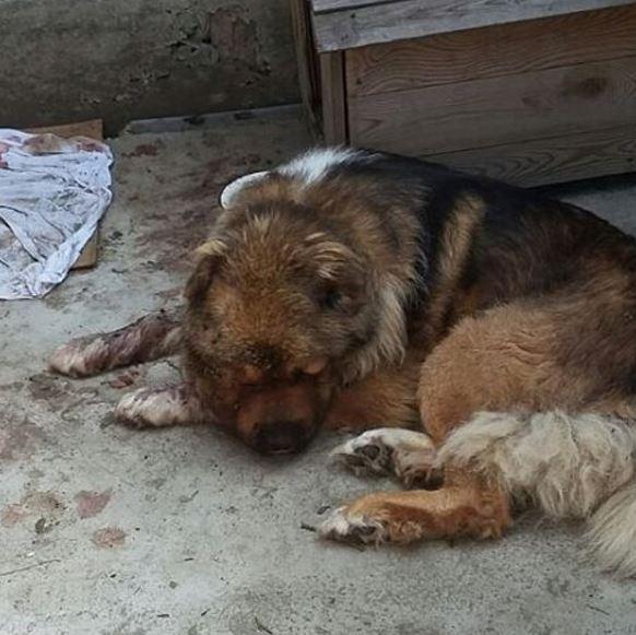Пёс умер спустя два дня после избиения
