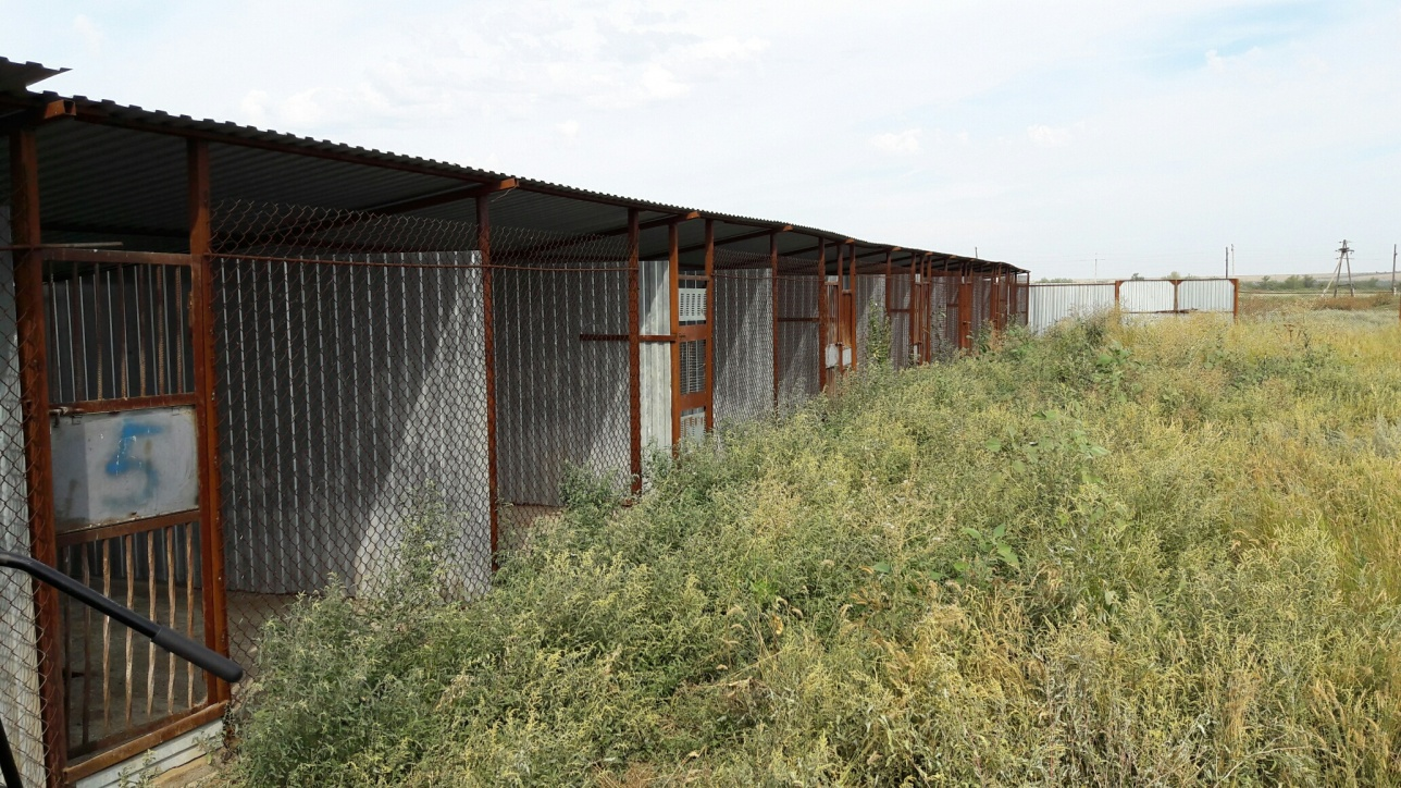 Замки на клетках с дворняжками взломали