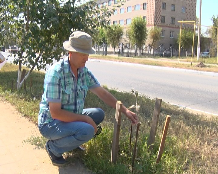 Вячеслав Лашин сетует, что коммунальщики ломают деревья