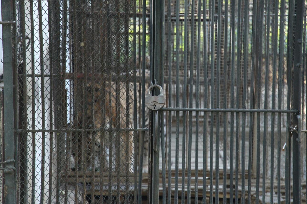 Зоопарк Алматы ожидает полная реконструкция