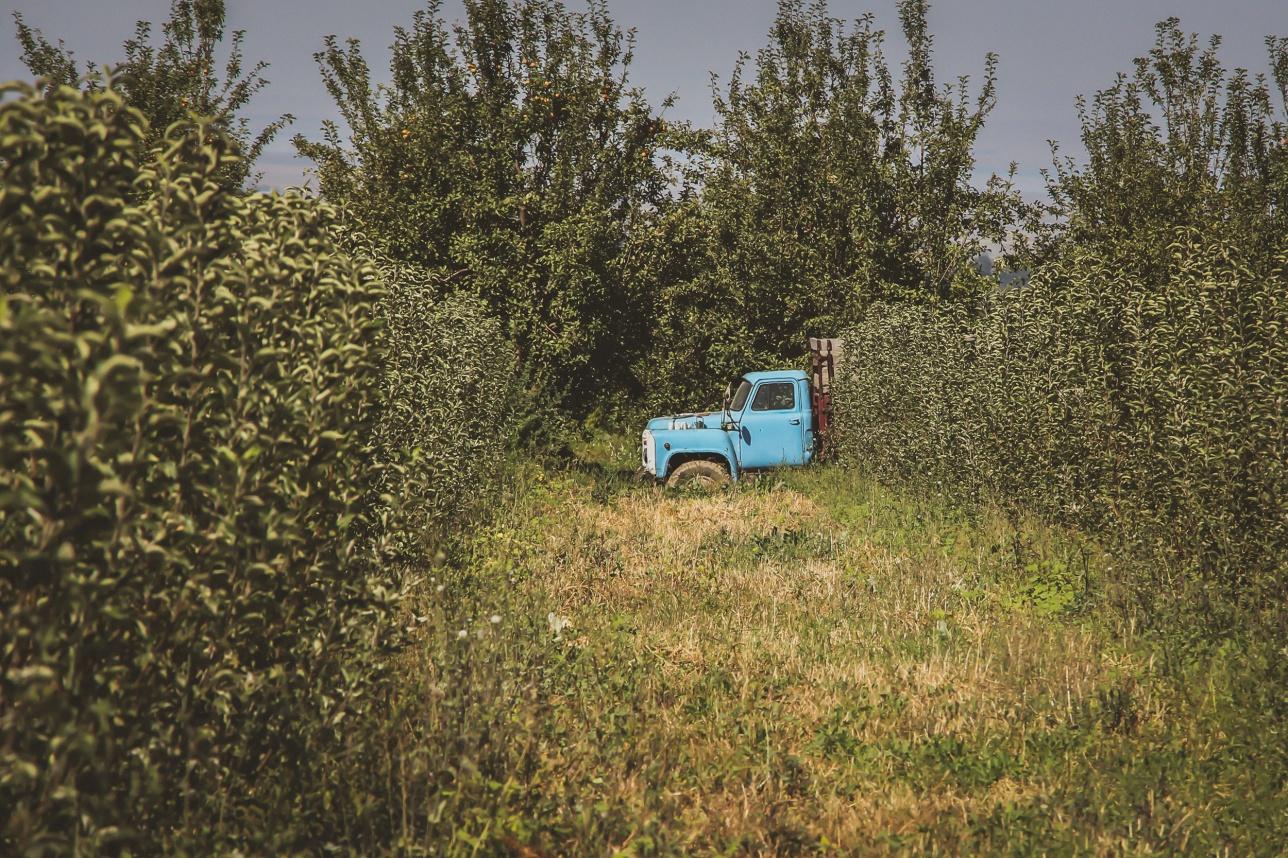 Сельское хозяйство в Казахстане