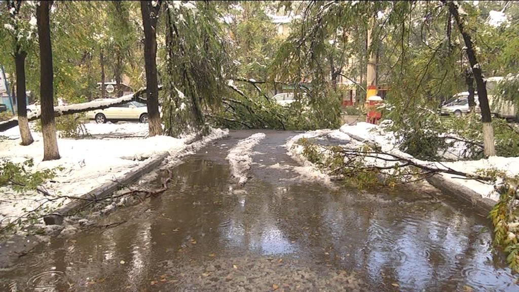 Деревья не выдержали тяжесть снега