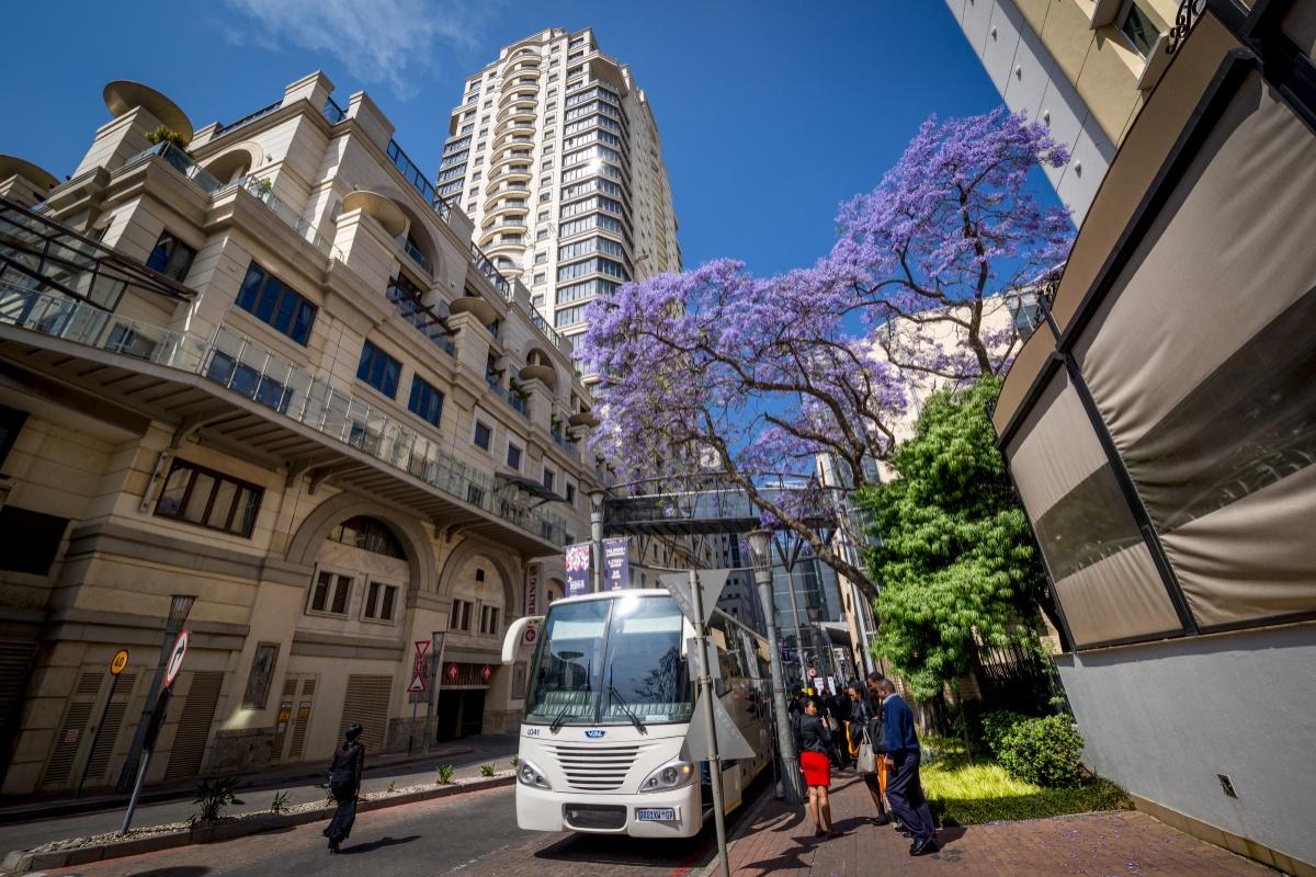 Цветущая Жакаранда в Сэндтоне - респектабельном пригороде Йоханнесбурга