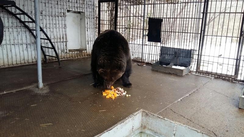 Медведице Зите больше всего понравились кукурузные палочки и сгущёнка