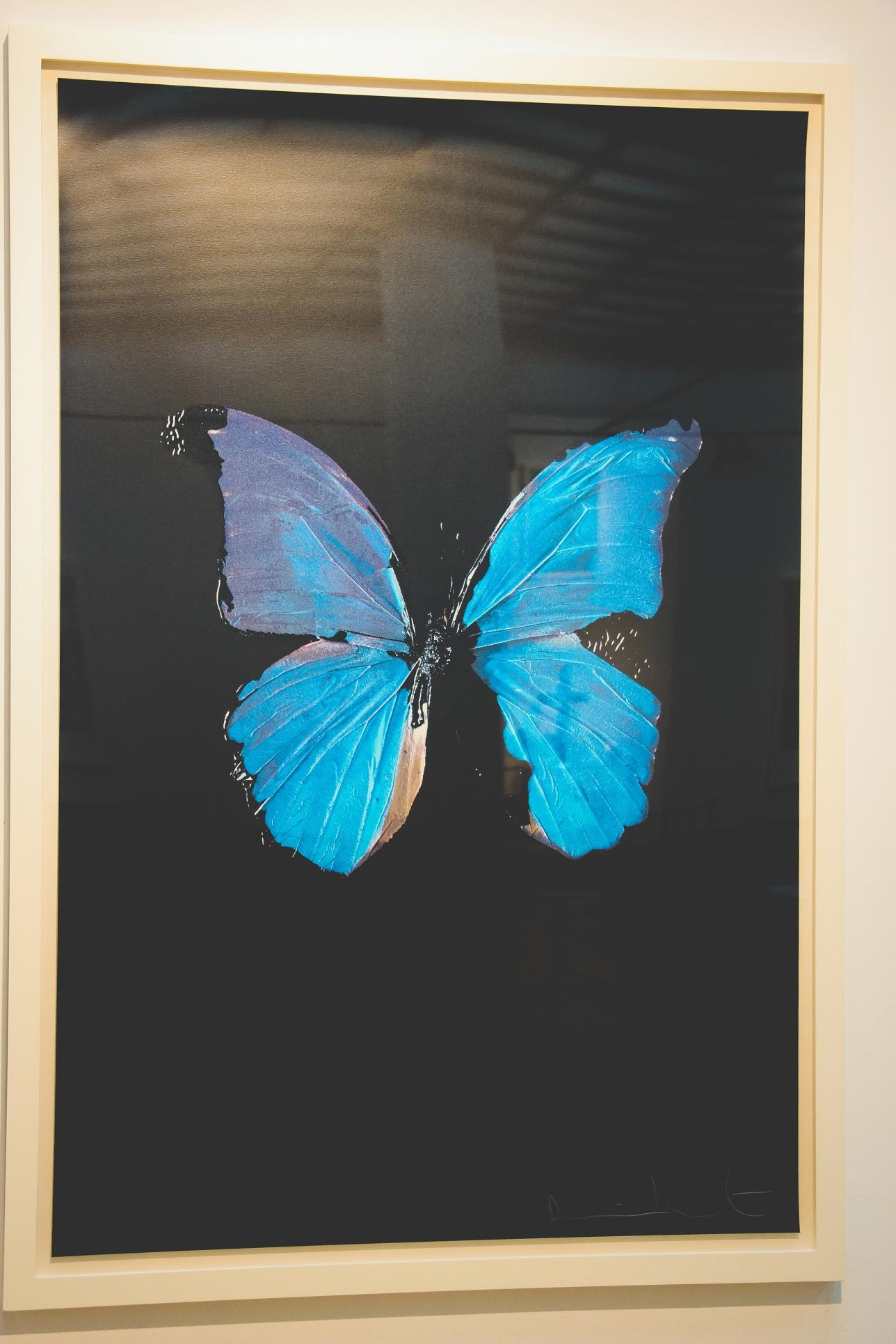 Синяя бабочка на чёрном фоне Дэмиена Хёрста