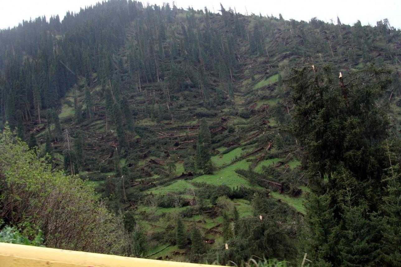 Иле-Алатауский национальный парк после урагана 2011 года
