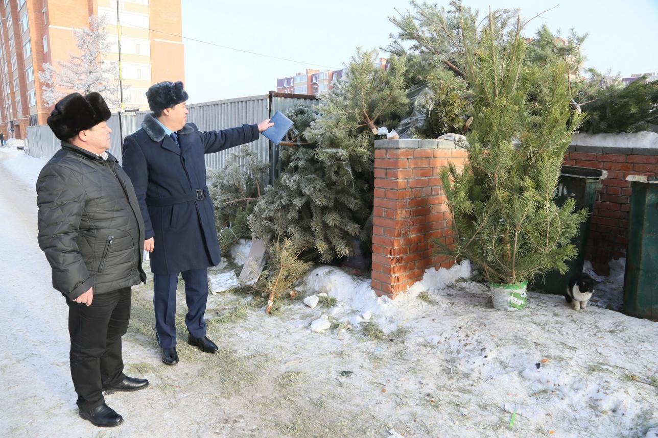 Прокуроры предупредили горожан об ответственности за незаконный выброс деревьев