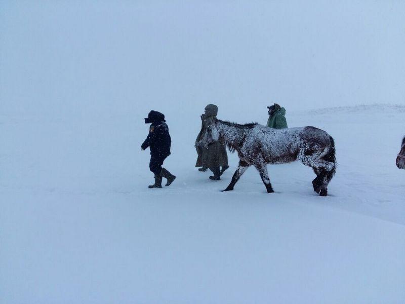 Сотрудники заповедника, которые плутали четыре дня, живы и даже не получили обморожений