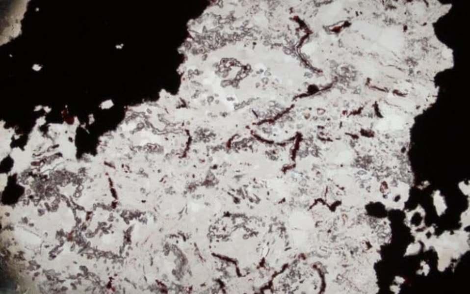 Микроскопический снимок одной из самых древних форм жизни на Земле