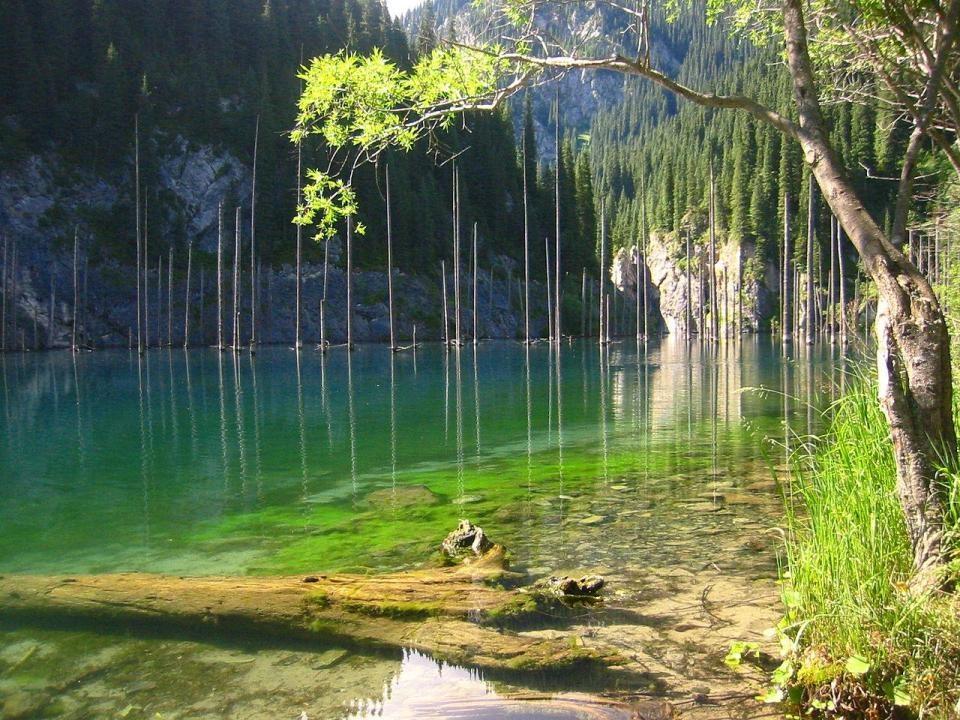 Деревья в озере не гниют из-за очень низкой температуры воды