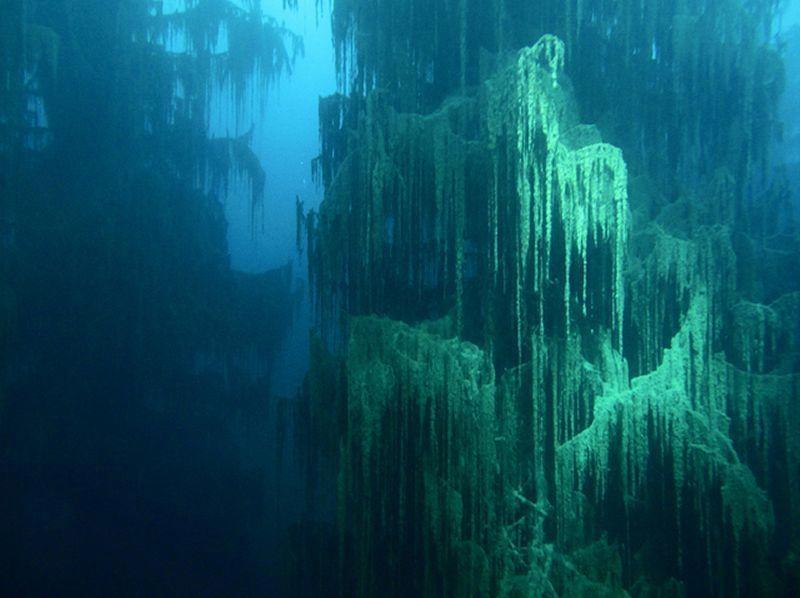 Яркий голубой цвет воды вызван известняковыми отложениями, окружающими озеро
