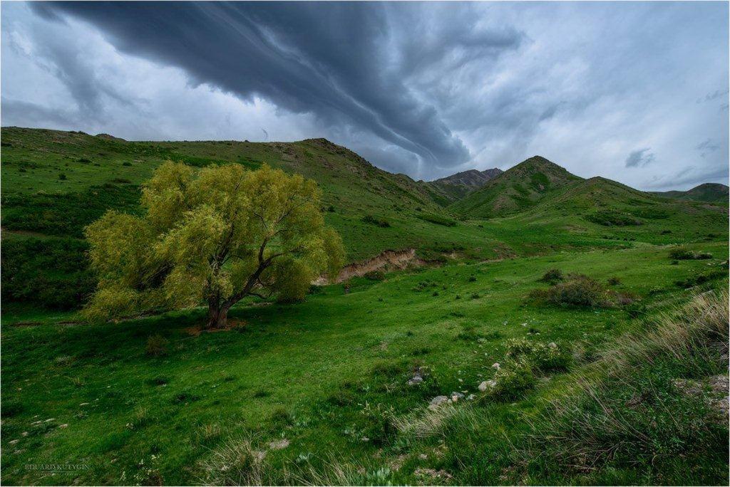 Фотовыставка о природе Казахстана открыта в Шадринске