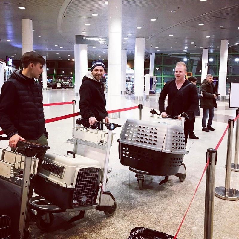 Кевин Даллмэн в аэропорту с животными по дороге домой