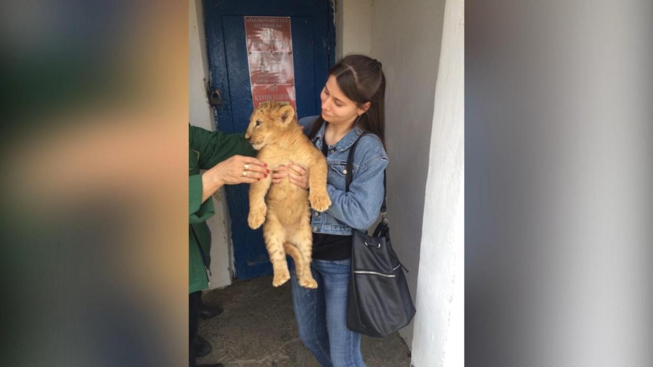 Платное фото со львёнком
