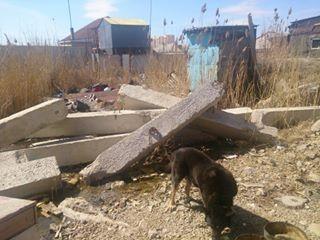 Раньше инвалид делил угол в сарае вместе со своей собакой