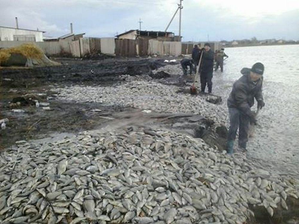 Рыба выбросилась на берег озера