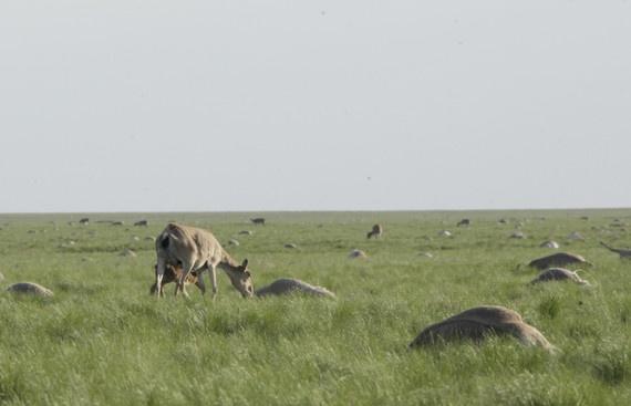 Доктор наук считает, что Казахстан теряет целую экосистему